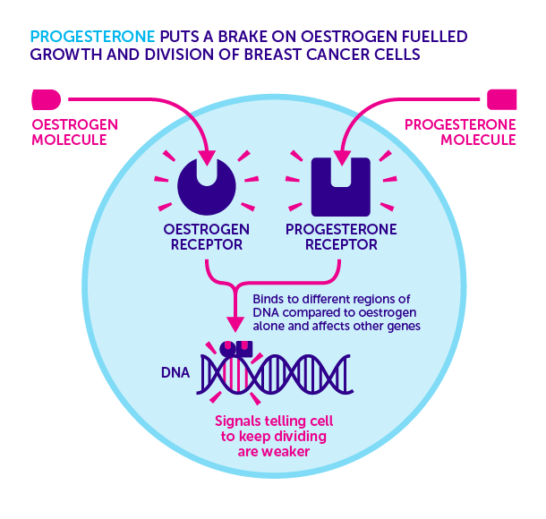 150707-Progesterone-Breast-Cancer